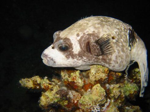 Diving-20Sharm-20el-20Sheikh-20-46-