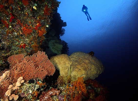 scuba-diving-in-florida
